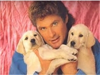 The HOFF profile photo